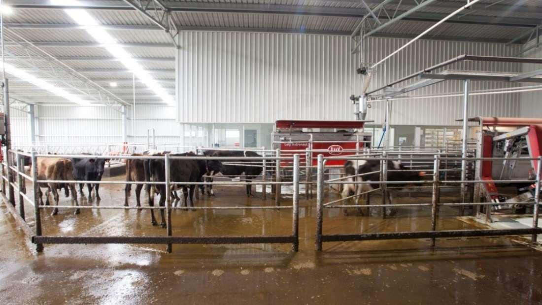 Robotic Dairy & Cheesemaking Facility
