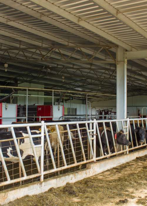 robot-dairy-feed-canopy