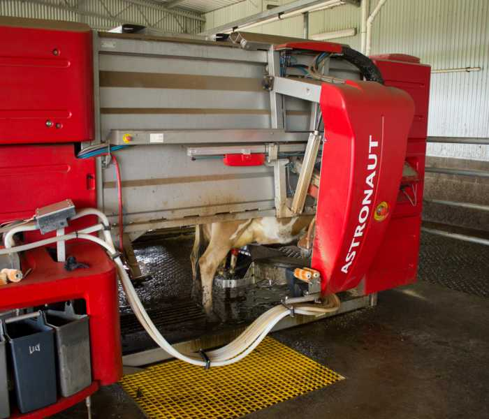 robot-dairy-machine