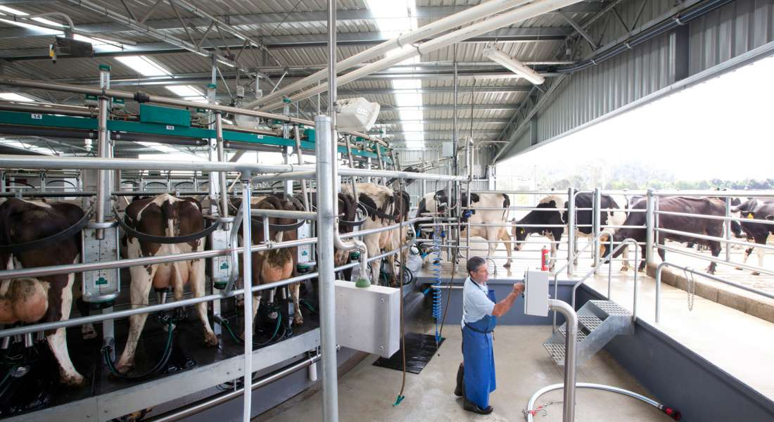 Dairy and Calf Rearing Facility