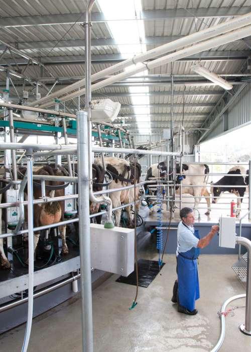 Bison-Rotary-Dairy-JW-33