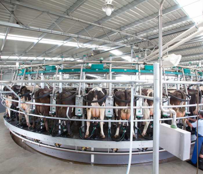 Bison-Rotary-Dairy-JW-31