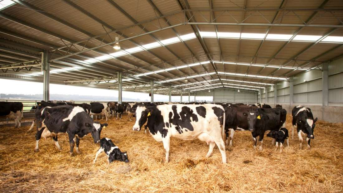 Calving And Loafing Barn