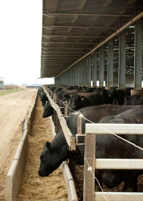 04 Feeding Yard